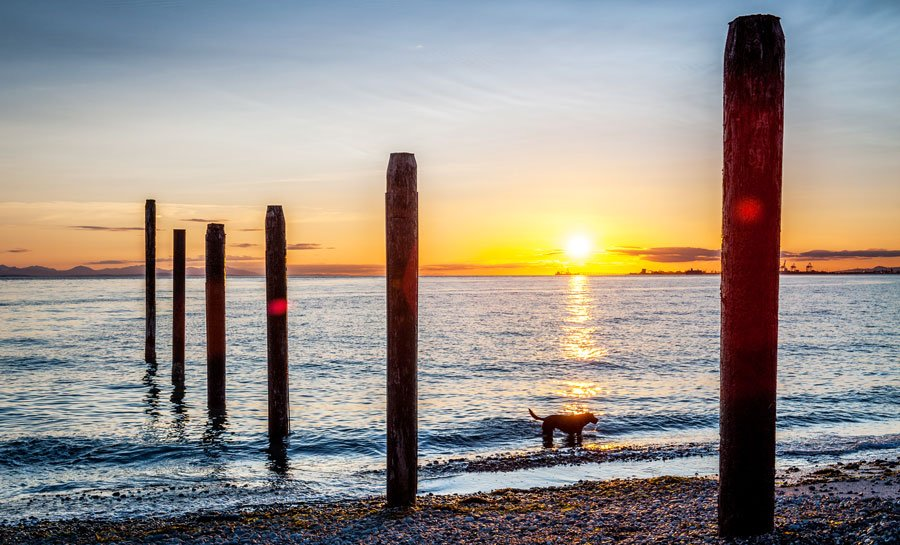 View of a dog in the coastal area of point roberts