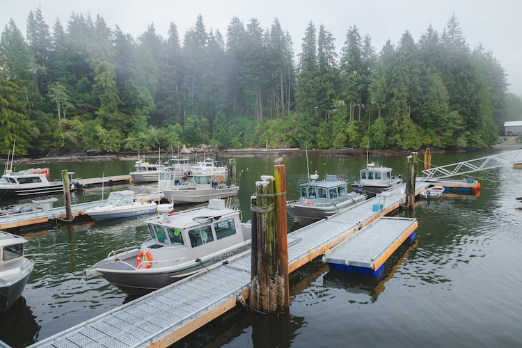 Boats, trees, and docks are spotted in Port Renfrew, Vancouver Island