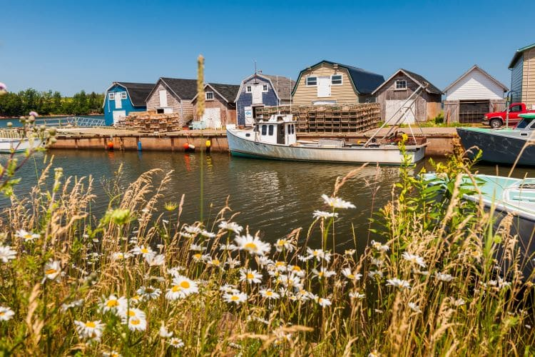 Wildflowers bloom in front of colorful buildings and a small white boat in Prince Edward Island, Canada