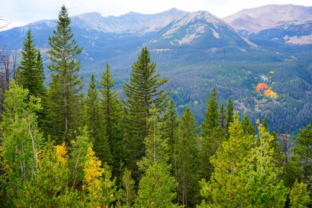 View of trees in Rocky Mountain National Park