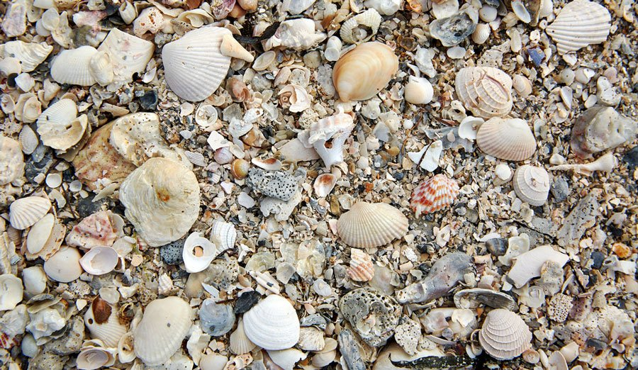 View of sea shells in the sand of Sanibel Island
