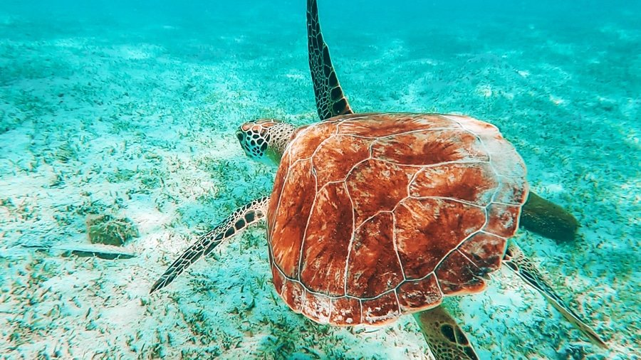 View of a sea turtle under the sea of Fort Lauderdale