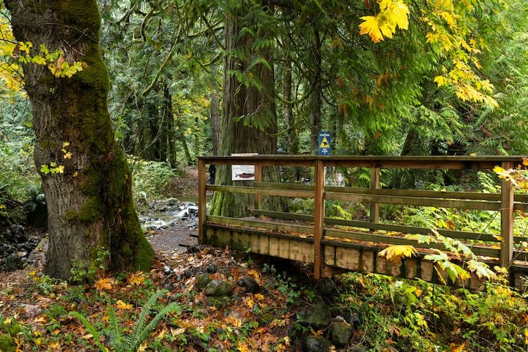 A wooden walkway among towering trees and lush greenery in Sooke Provincial Park, Vancouver Island