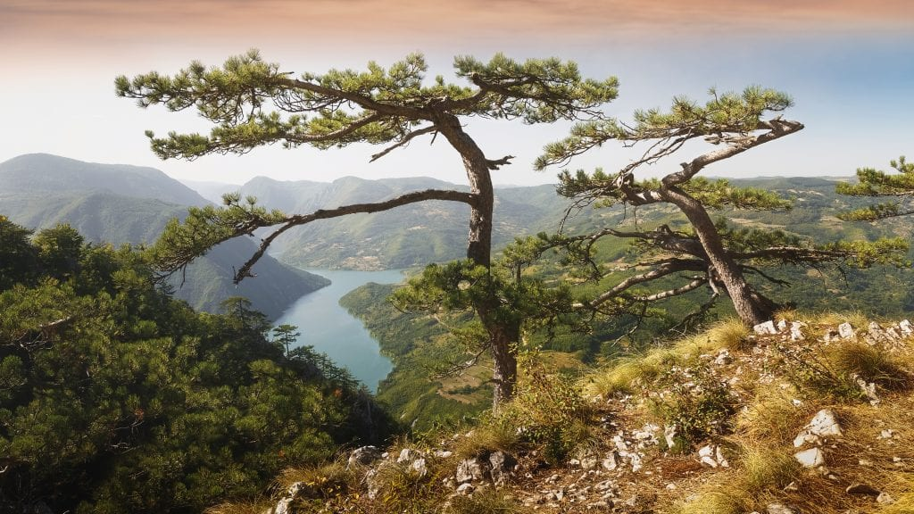 Tara National Park, a Top Destination in Serbia
