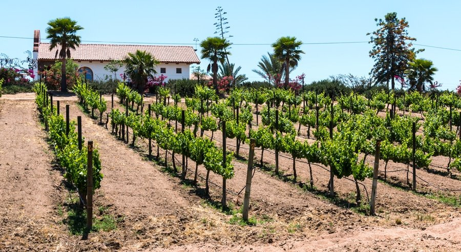 A beautiful view of the Adobe Guadalupe Winery
