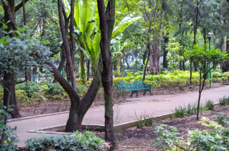 View of bench and trees at Parque Mexico in Condesa neighborhood of Mexico City
