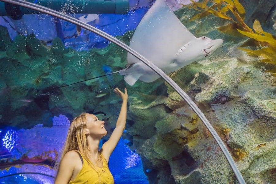 Stingray in 360 degree underwater exhibit