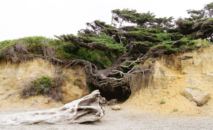 View of Tree of Life in coastline Pacific