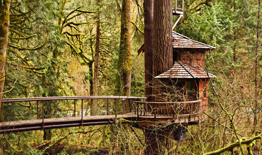 View of a Burl Treehouse at Treehouse Point