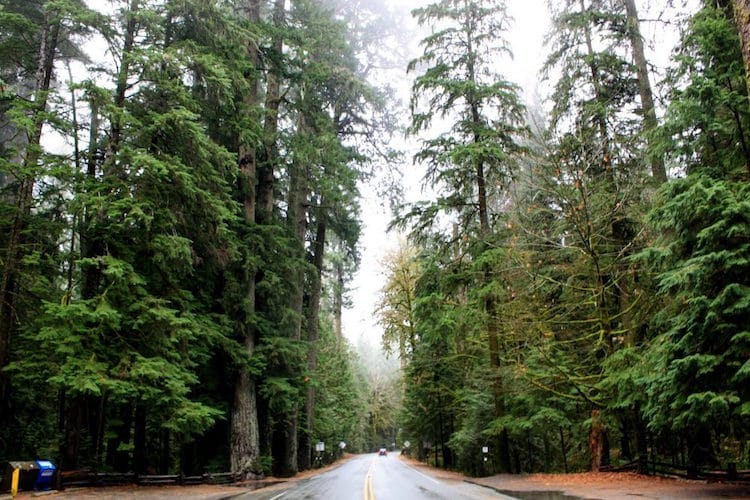 A road runs through Cathedral Grove in Vancouver Island, Canada