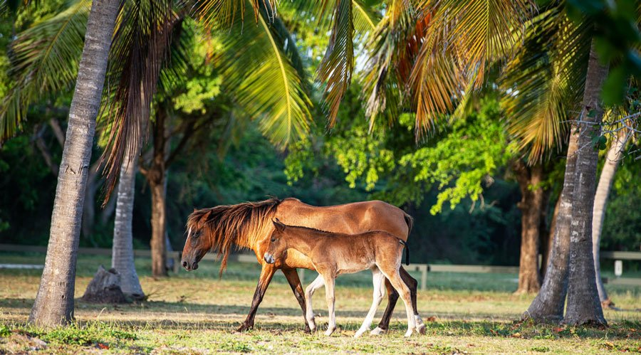 View of two horses walking with palm trees around them