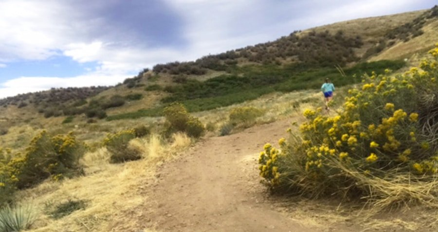 View of the author trail running in William Hayden Park