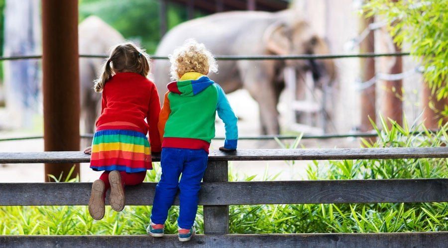 View of two little kids watching elephants in a zoo