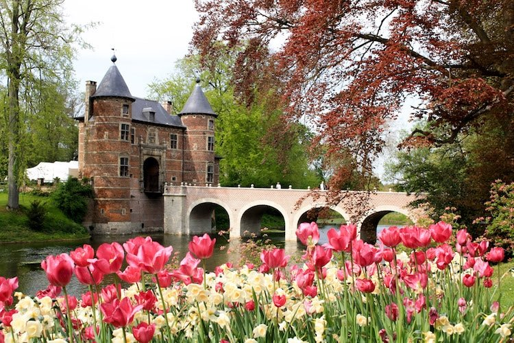 Groot-Bijgaarden Castle outside of Brussels, Belgium during springtime. Pink Tulips bloom in front of a moat and bridge.