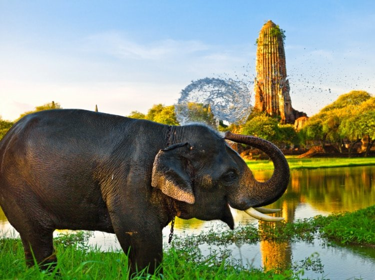 Elephant bathing in Ayutthaya, Thailand