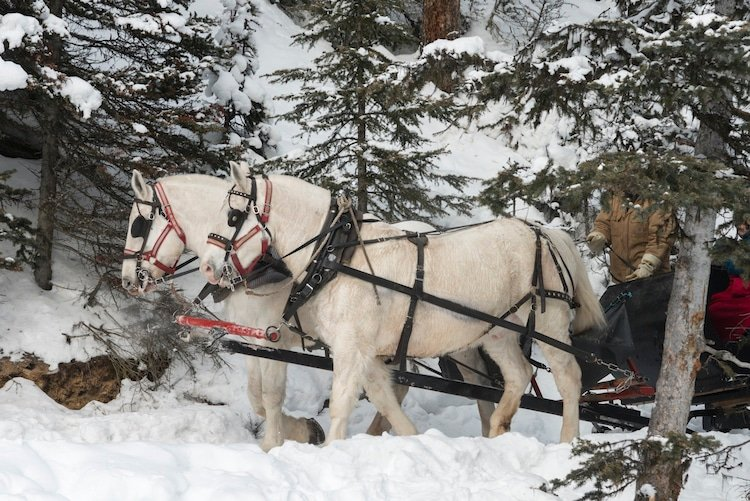 Horse drawn sleigh, Lake Louise, Banff National Park, Alberta, Canada