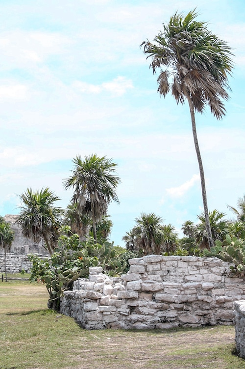 Palm trees in Tulum Mexico