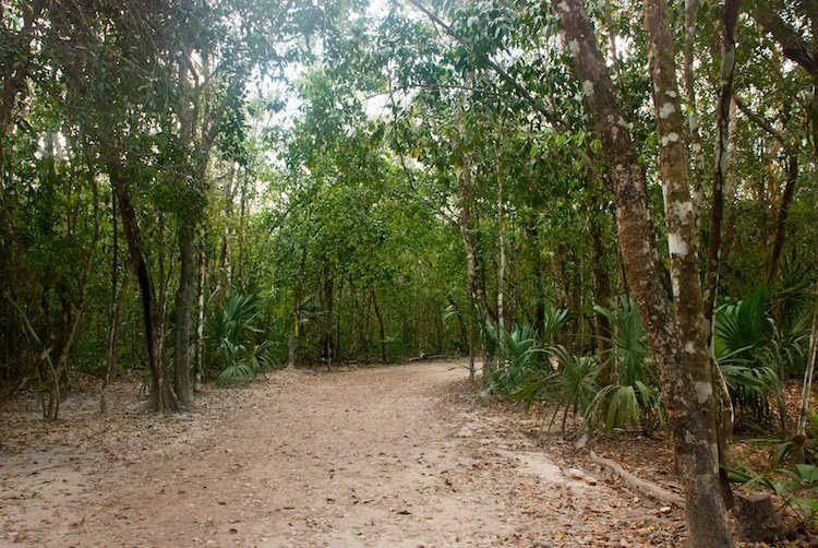 Jungle trail bordered by trees, in Xel-Ha Park, Mexico