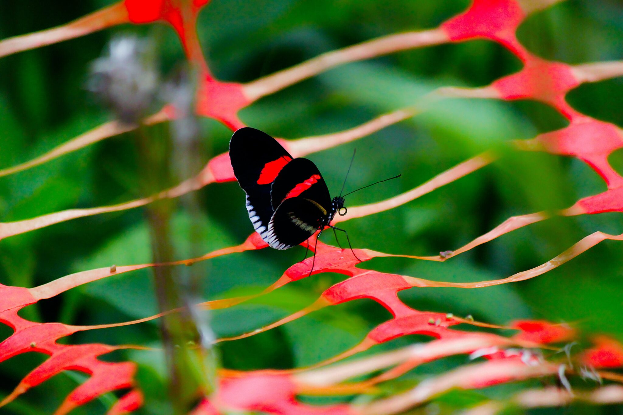 small black butterfly on a plant